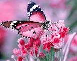 Vikshipta mind - occasionally steady mind (butterfly mind),