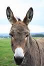 1. Mudda mind - Dull, (donkey mind )